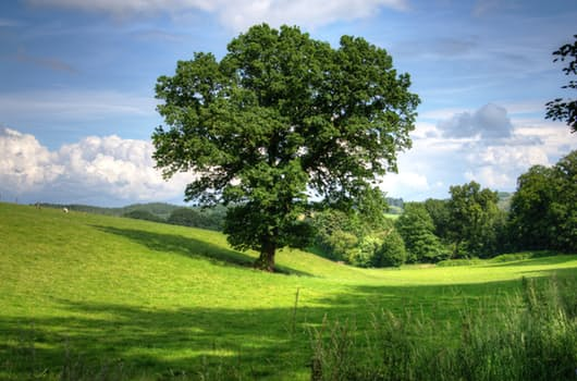 tree-oak-landscape-view-53435